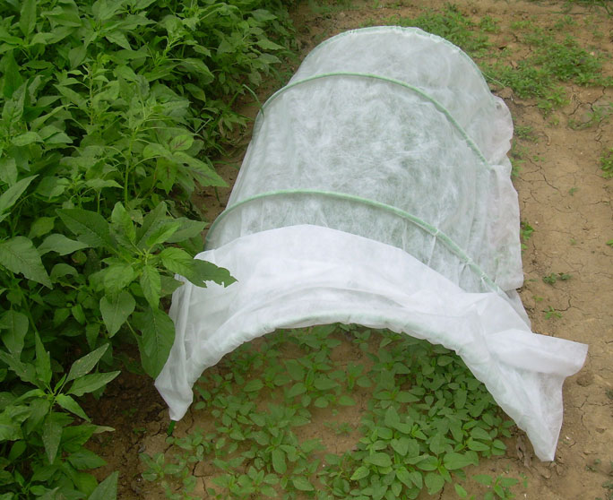 Protect Your Crop In The Cold Winter